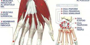 preparate pentru vindecarea ligamentelor și articulațiilor probleme la încheietura mâinii
