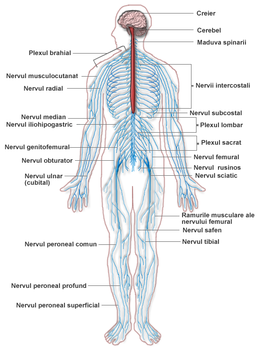 vindecător de cremă pentru recenzii la articulații lichid în tratamentul bursitei genunchiului