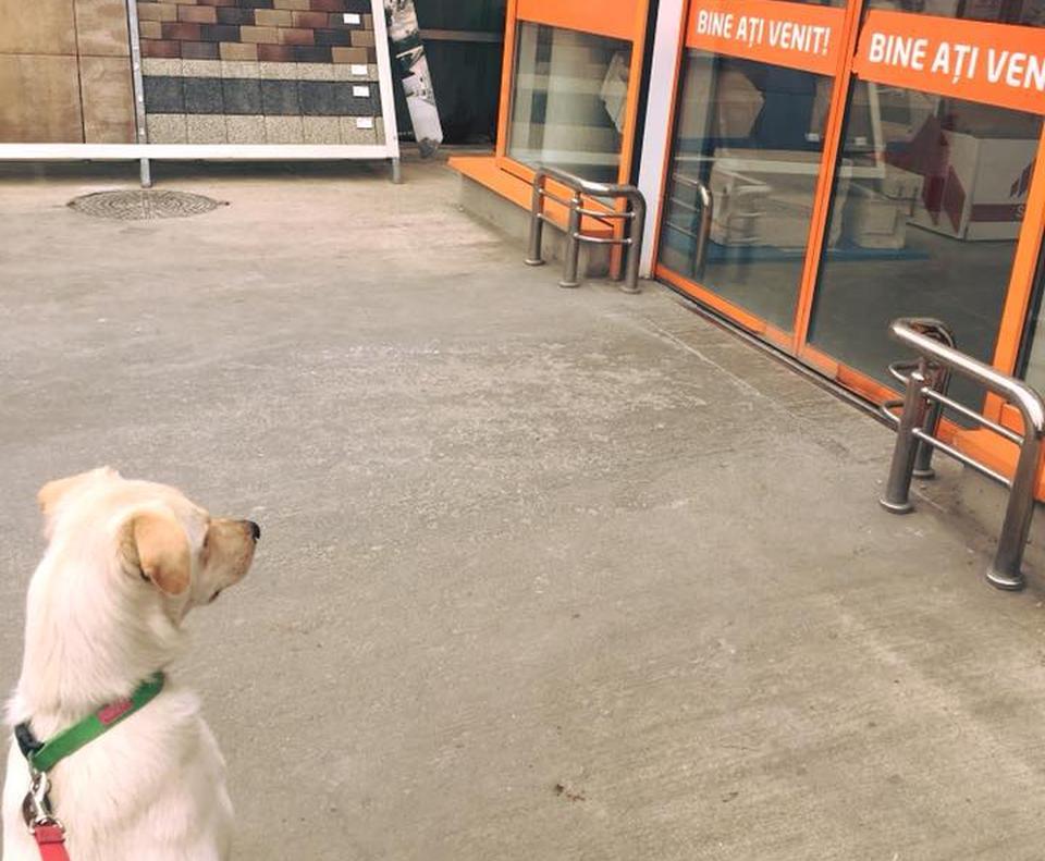 unguent comun într-un magazin de animale de companie